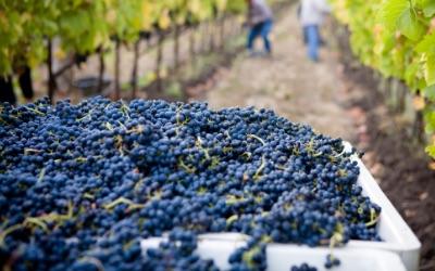 Wineries / Vineyard Management